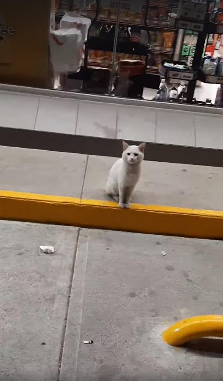 Gato inteligente pide comida