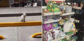 Gato inteligente visita tienda para pedir a la gente que le compre golosinas