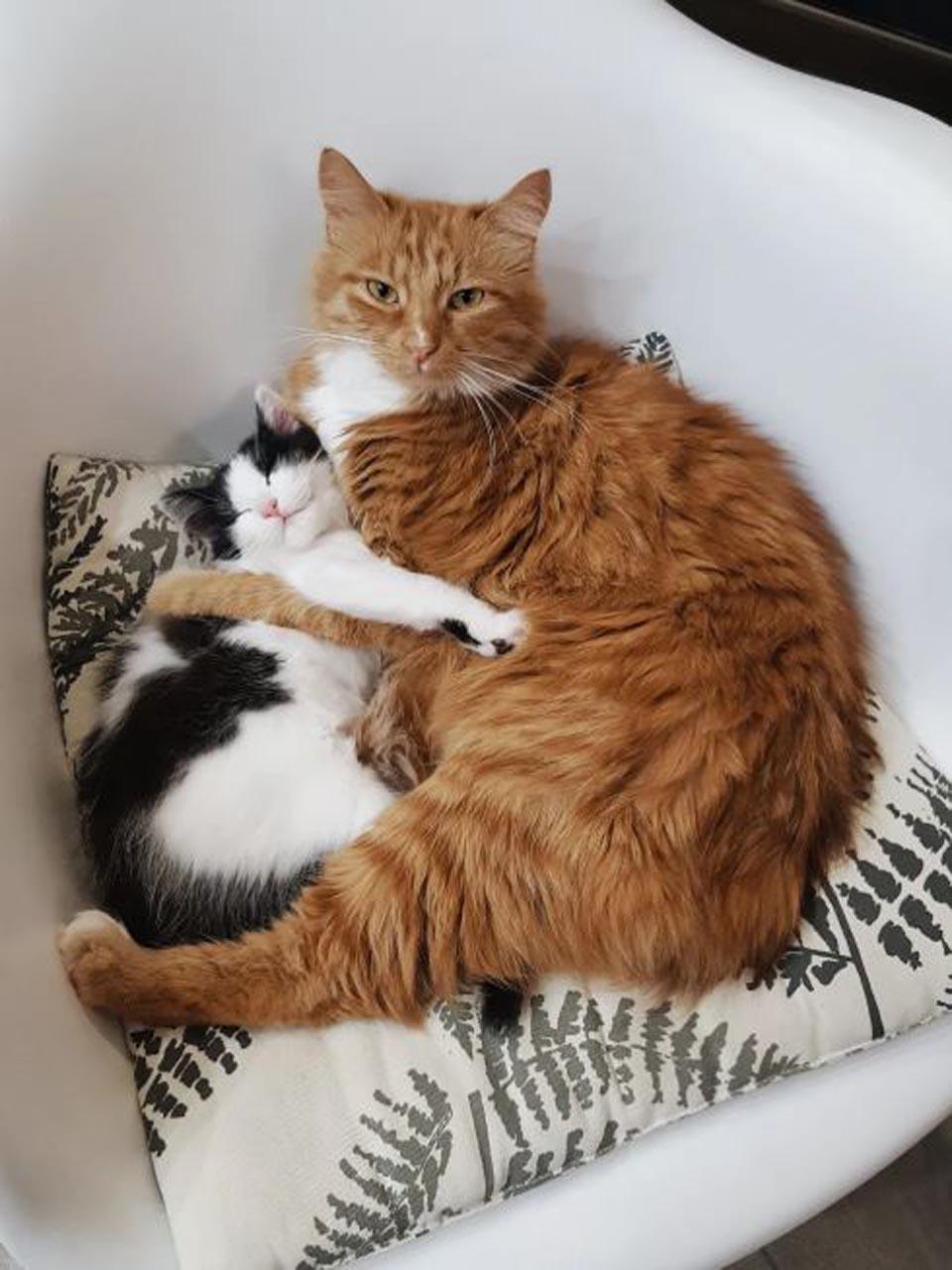 Gato protege a gatita rescatada