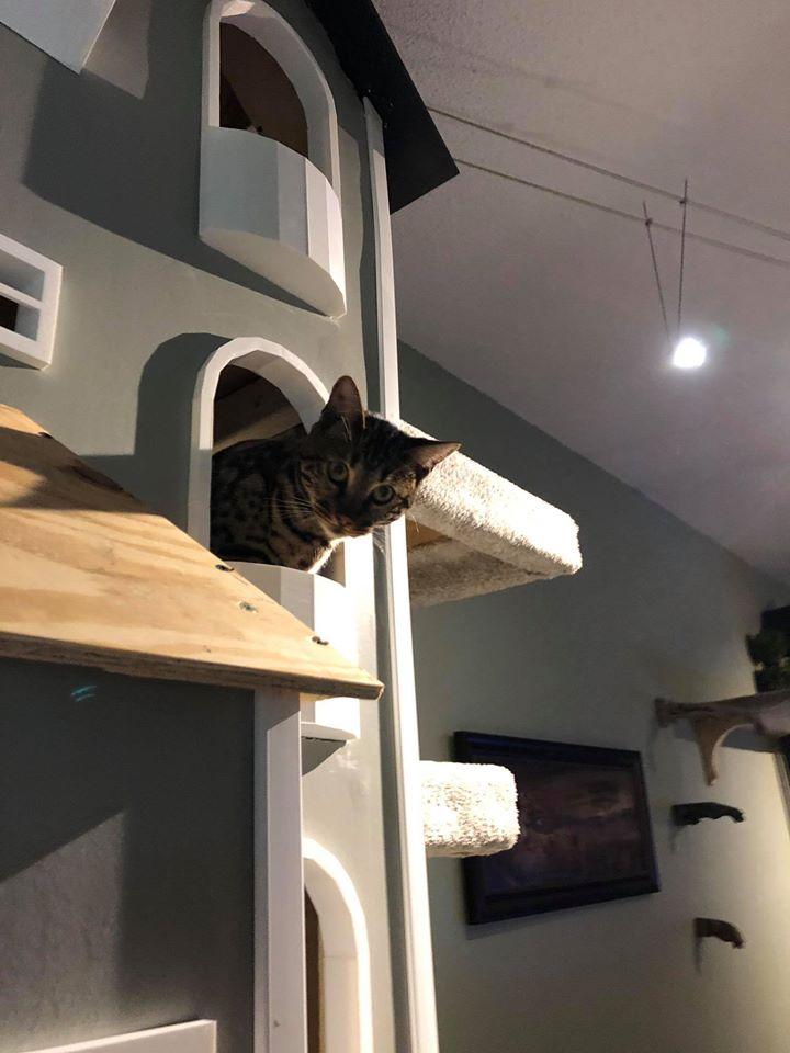 Gato vigilando desde la torre