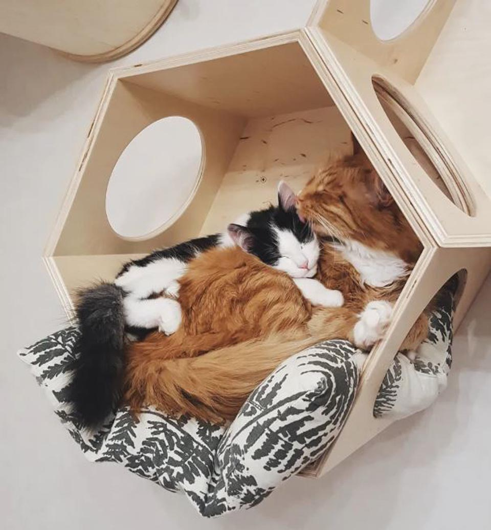 Gatos duermen acurrucados