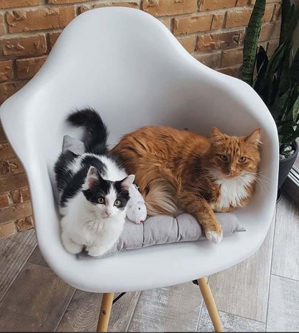 Gatos en una silla blanca