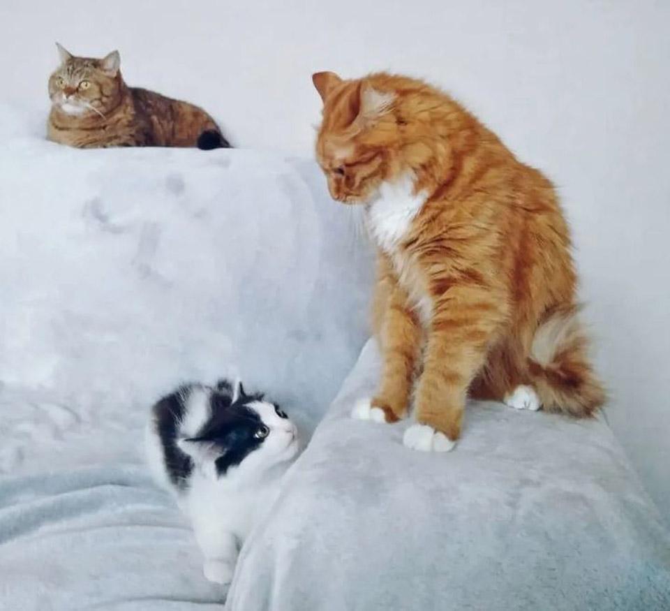 Gatos se observan entre ellos