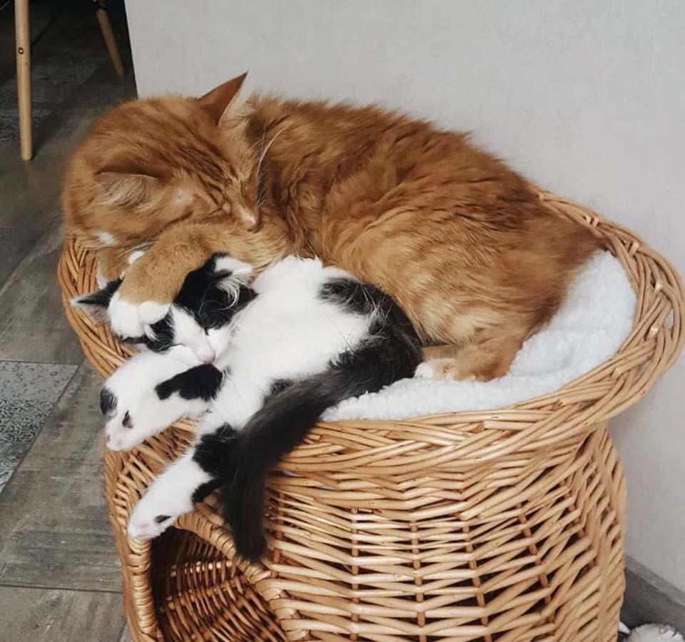 Gatos son inseparables