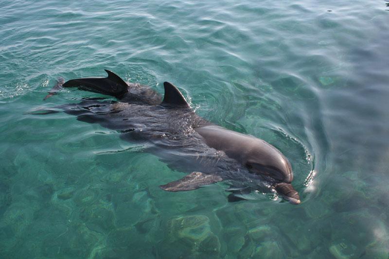 Holbox-delfines