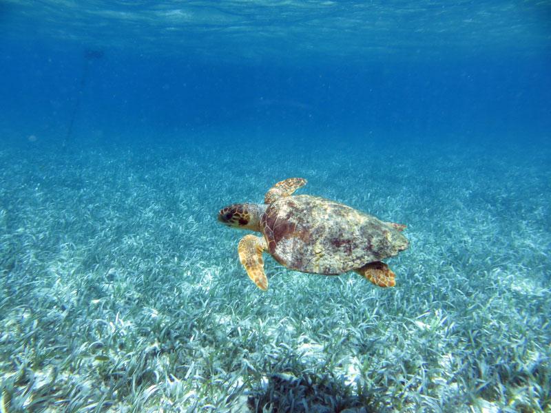 Tortuga regresa a las playas