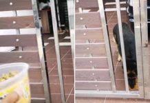 Hombre alimenta al perro de su vecino que no puede volver a casa