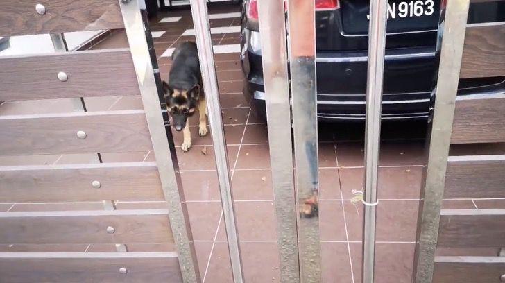 Hombre alimenta perro que está solo