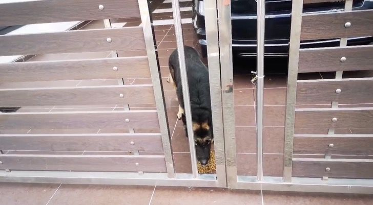 Hombre alimenta perro