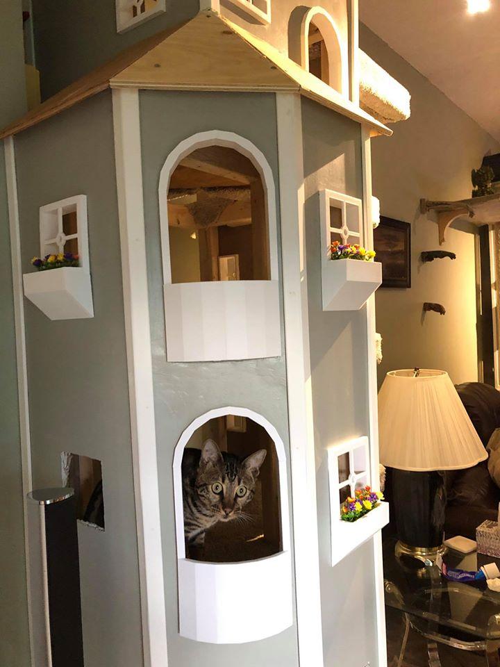 Hombre hace torre para sus gatos