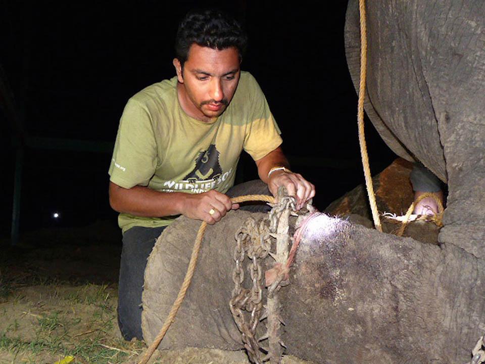 Hombre rescata a elefante encadenado
