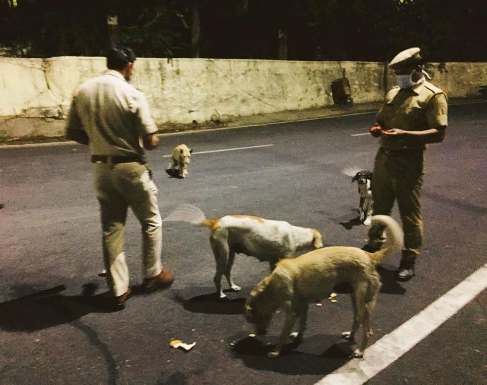 Hombres alimentan a perros en la calle