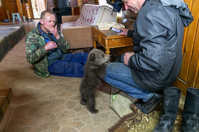 Humanos cuidando cachorro de oso