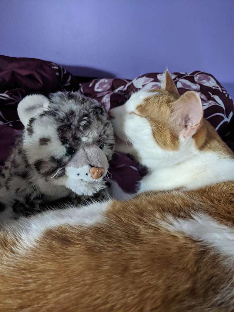Lucas y su leopardo