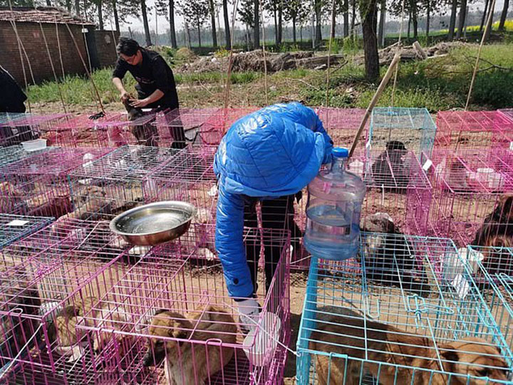 Mascotas liberadas de matadero
