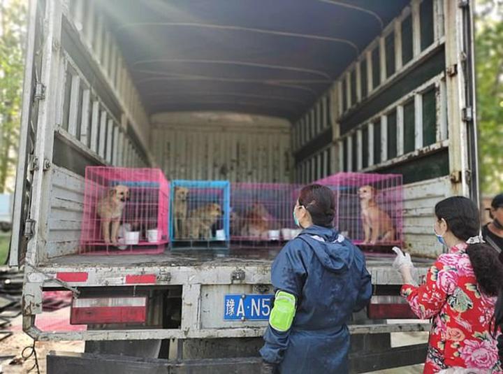 Mascotas rescatadas de matadero ilegal
