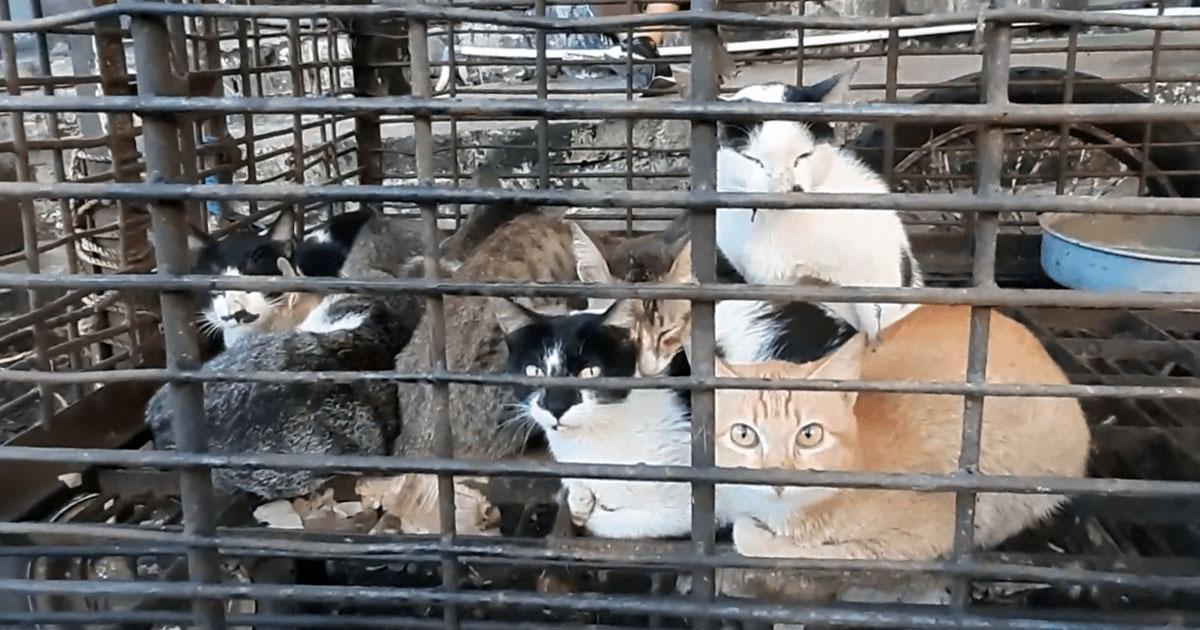 Mercado en Indonesia aún vende animales exóticos