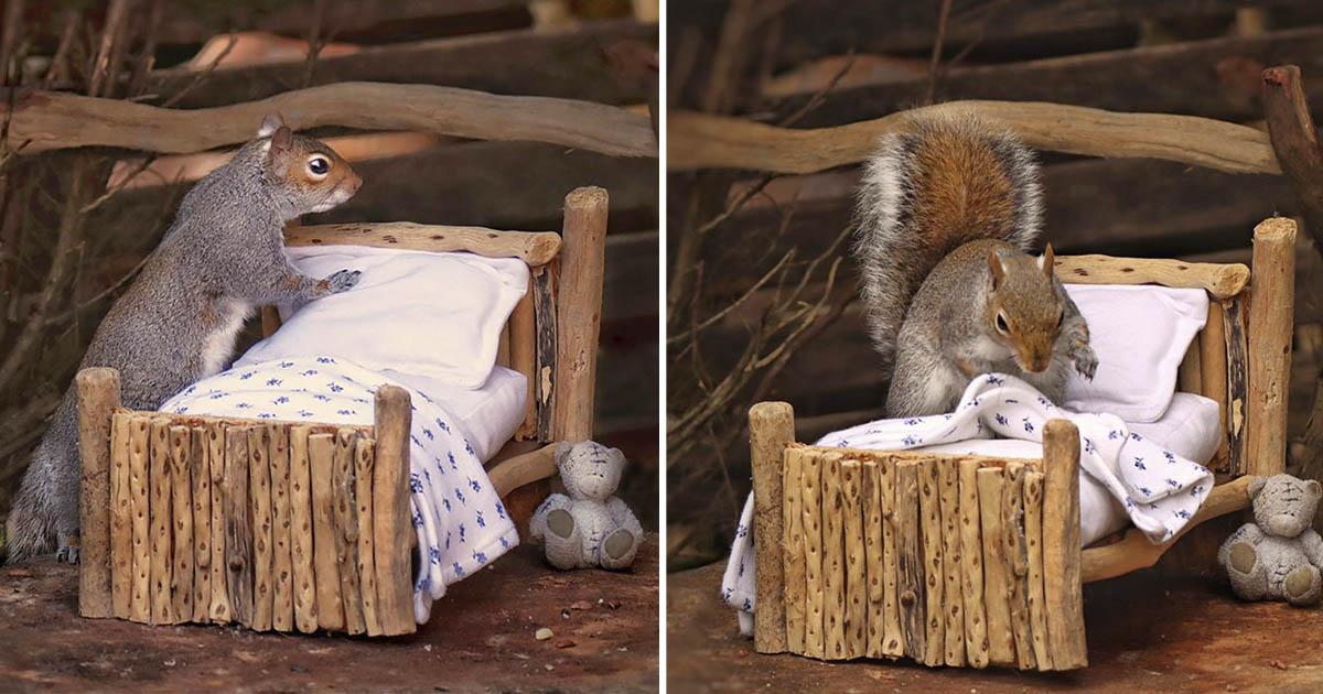 Mujer construye cama pequeña para ardillas
