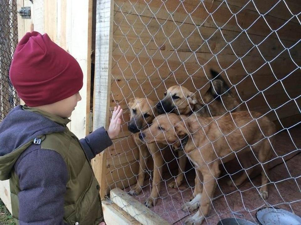 Niño y perros de refugio