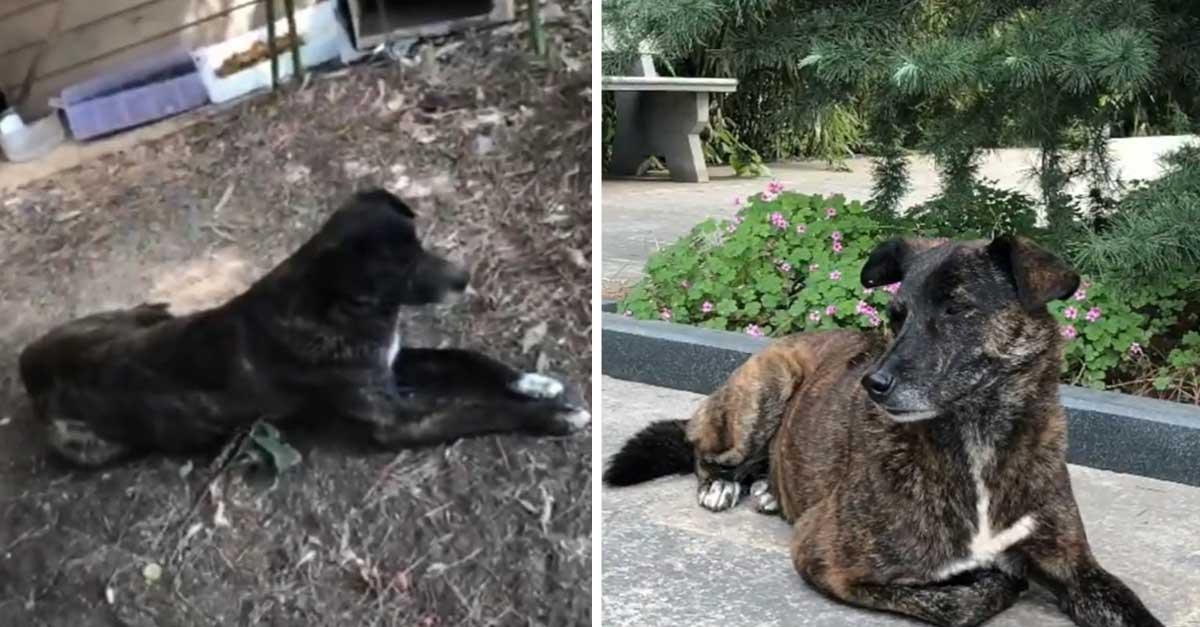 Noble perrito espera a la familia que lo abandonó