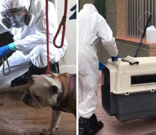 Organización ayuda a animales solos tras emergencia por coronavirus