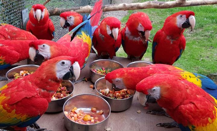 Paradise Park zoológico