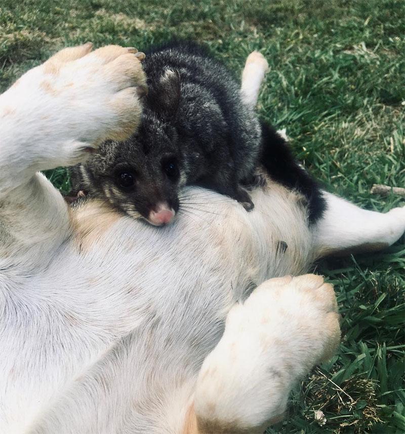 Perrita con su bebé adoptado