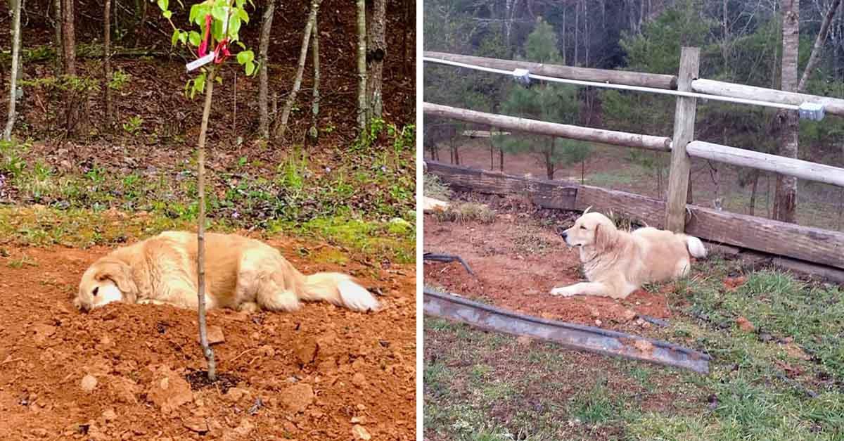 Perrito de tres patas llora a sus amigos después de que fallecieron