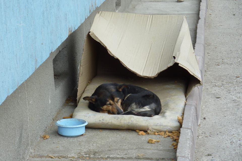 Perrito dormía en la calle con una caja de cartón