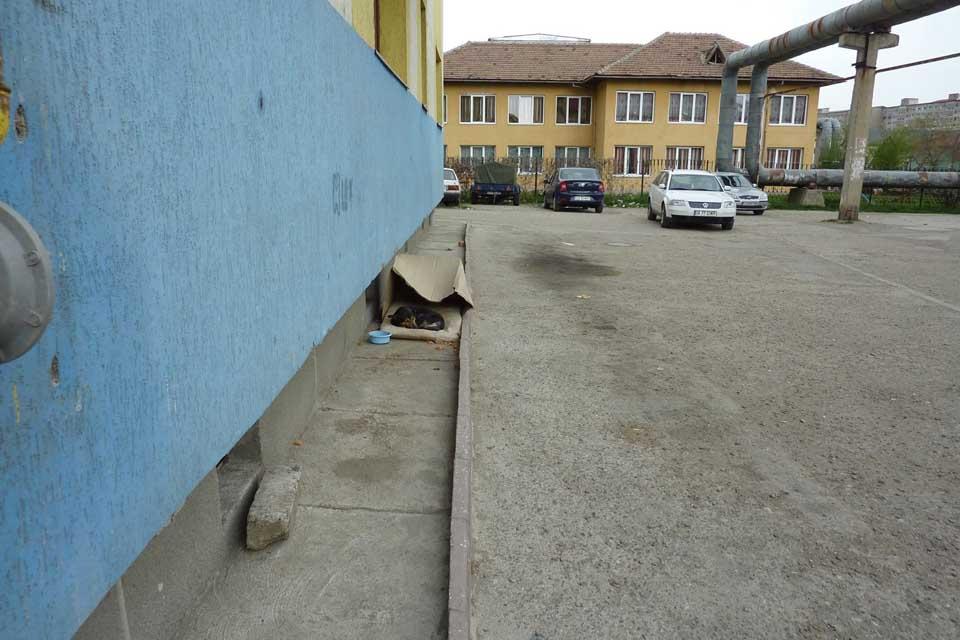 Perrito en la calle