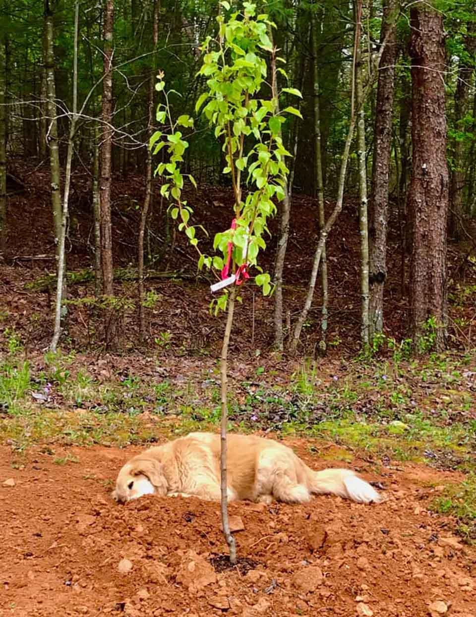 Perrito llora por la muerte de un amigo