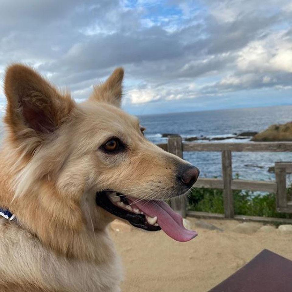 Perrito recuperado disfruta el aire libre