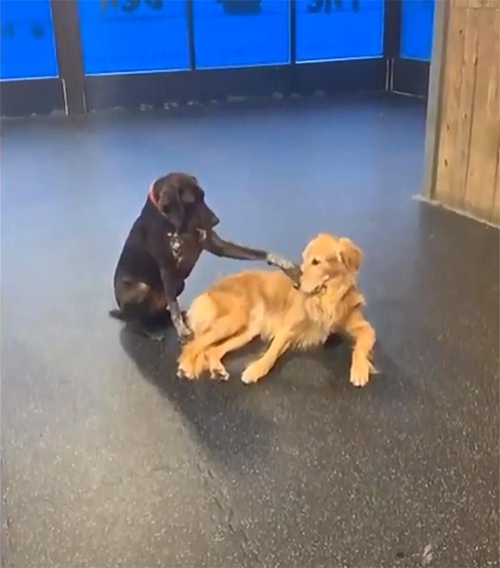 Perro acaricia a todo en la guardería