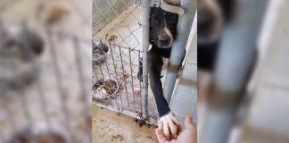 Perro del refugio toma la mano de cualquiera que pase por su perrera