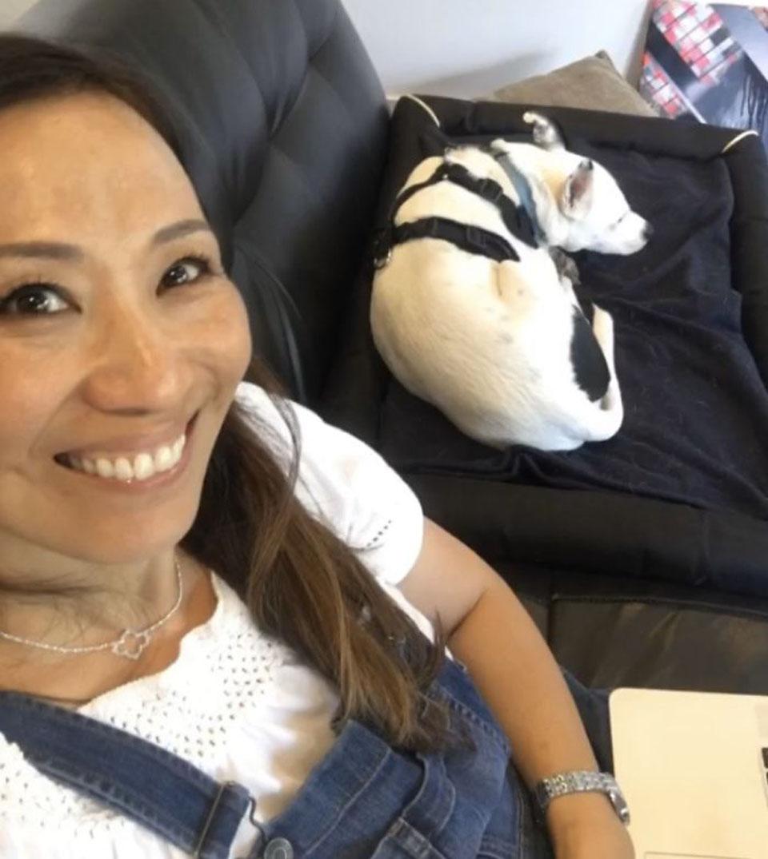 Perro duerme en el sofá