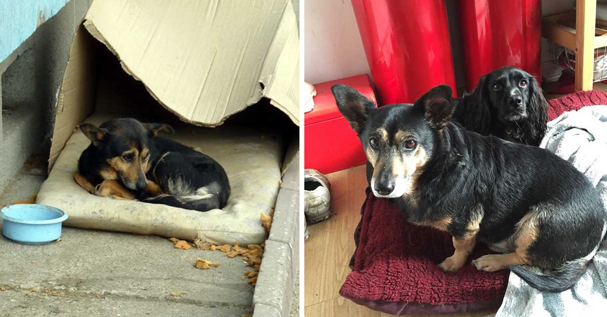 Perro en busca de compañía ya tiene un hogar
