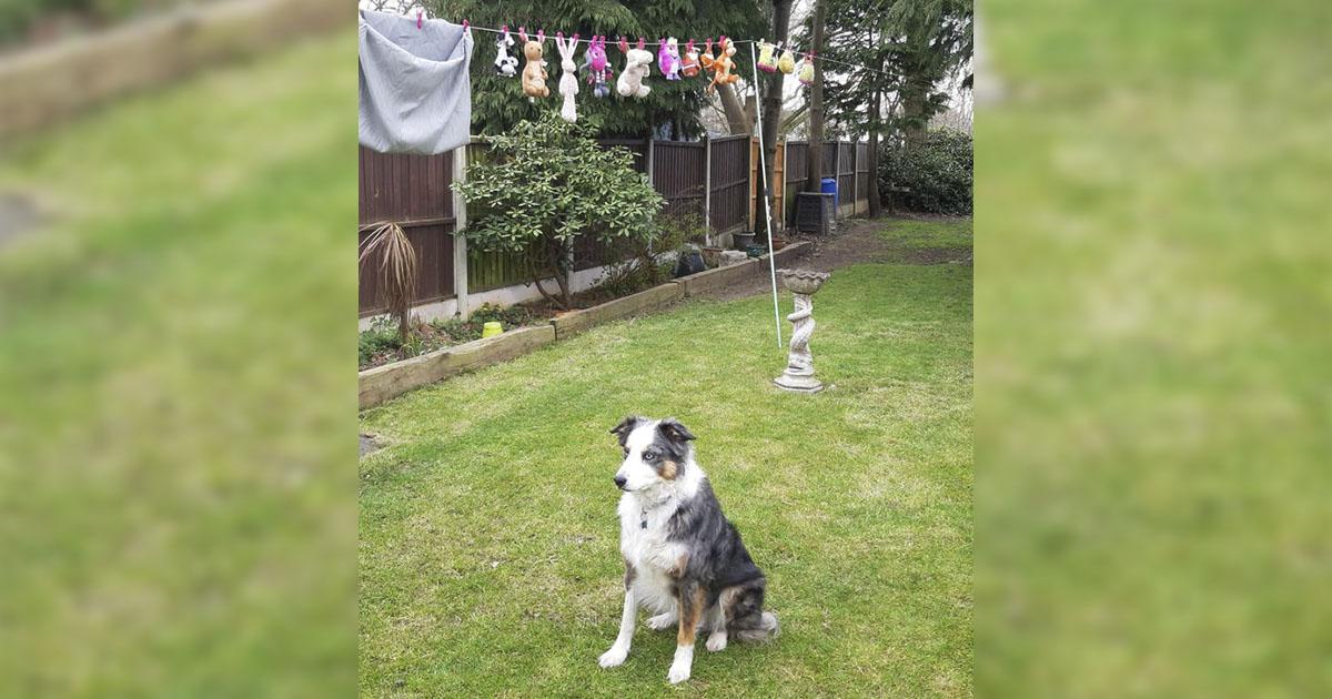 Perro no deja sus juguetes mientras se secan