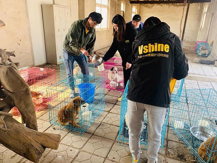 Perros rescatados de matadero ilegal