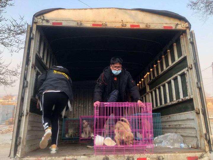 Perros rescatados de matadero