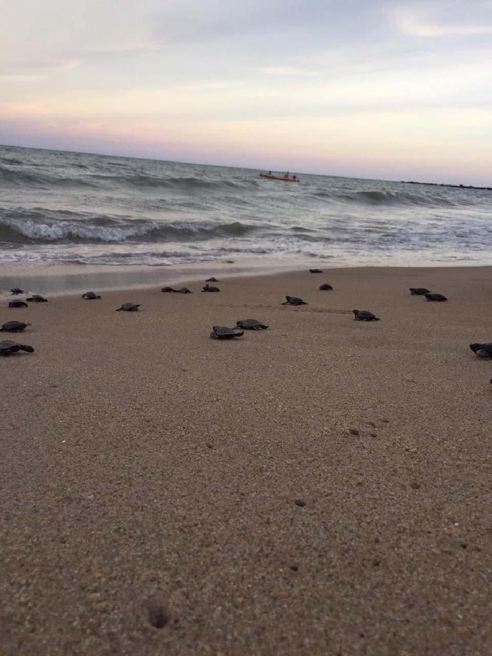 Playa con pequeñas tortugas