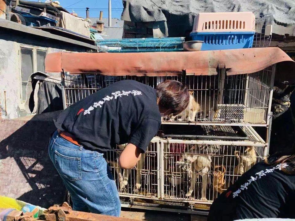 Prohíben el consumo de perros