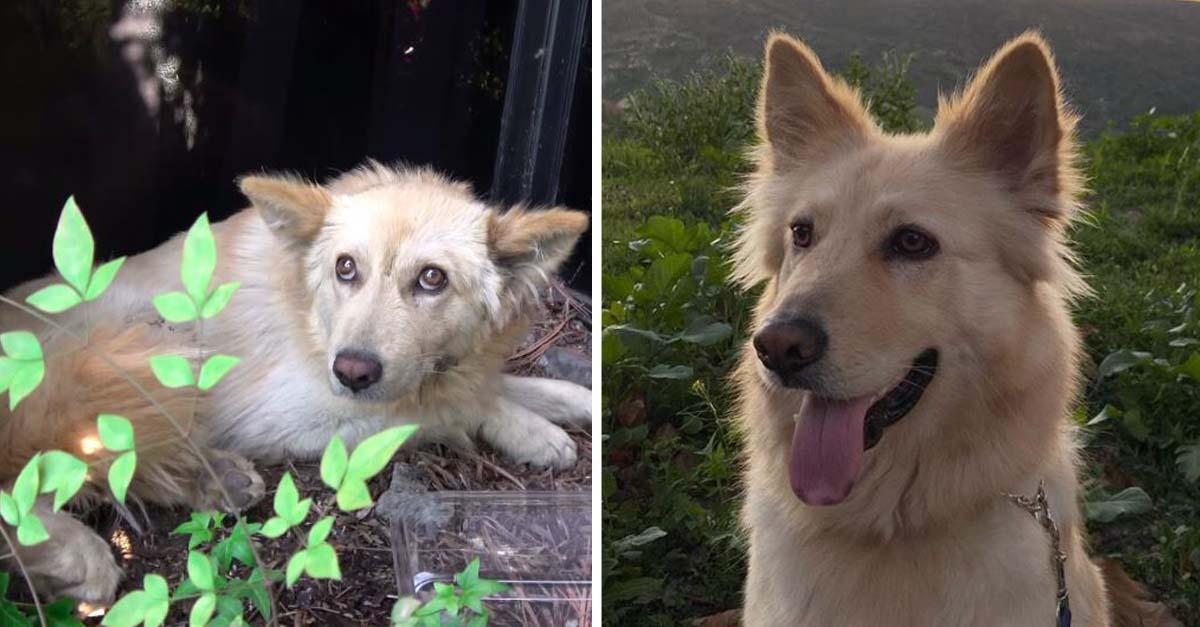 Rescatan a perrito inmóvil escondido entre los arbustos debido al maltrato