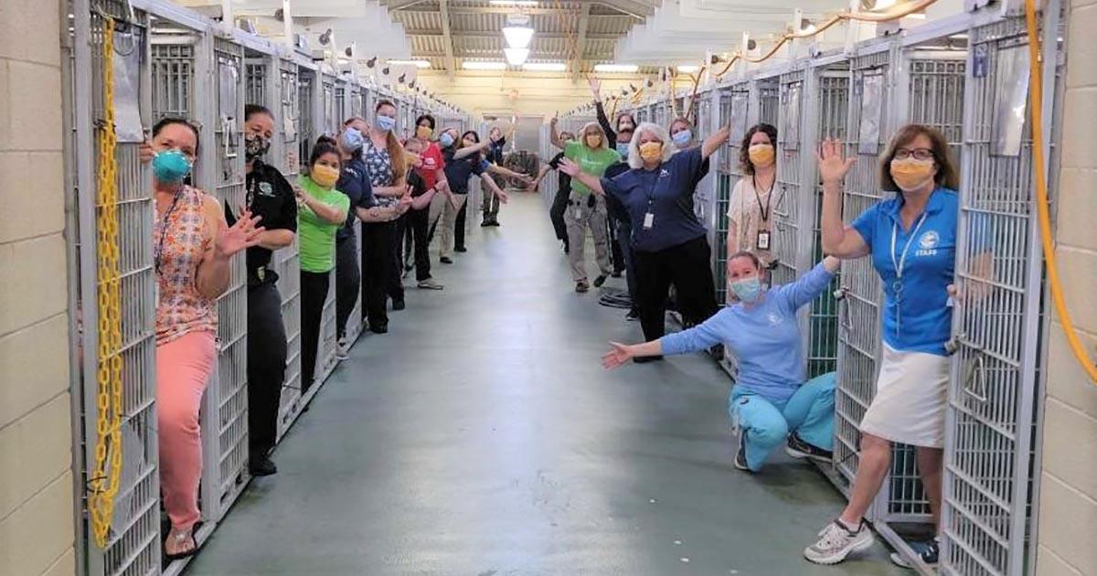 Rescatistas celebran que el refugio está vacío por primera vez