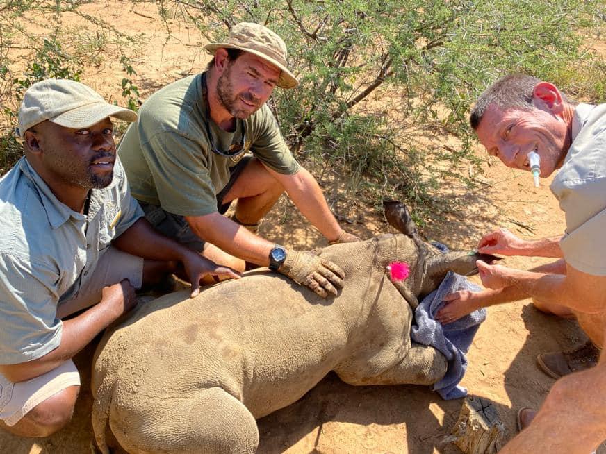 Rino rescatado por equipo Rhino 911