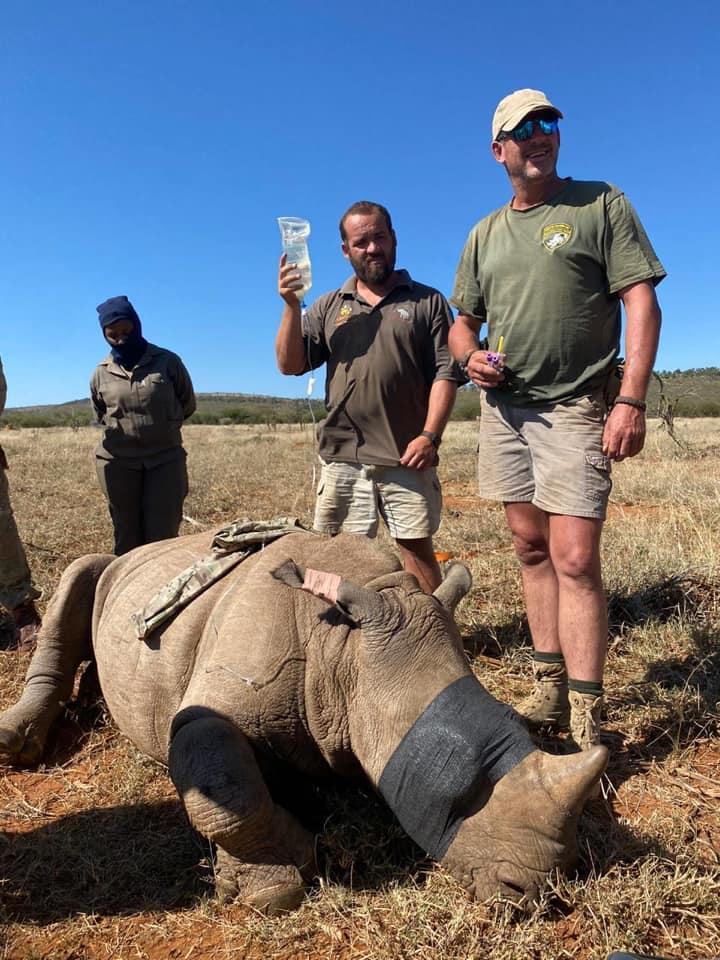 Rinoceronte salva de los cazadores furtivos