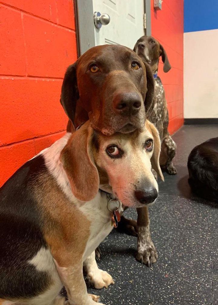 Ruby y su amigo