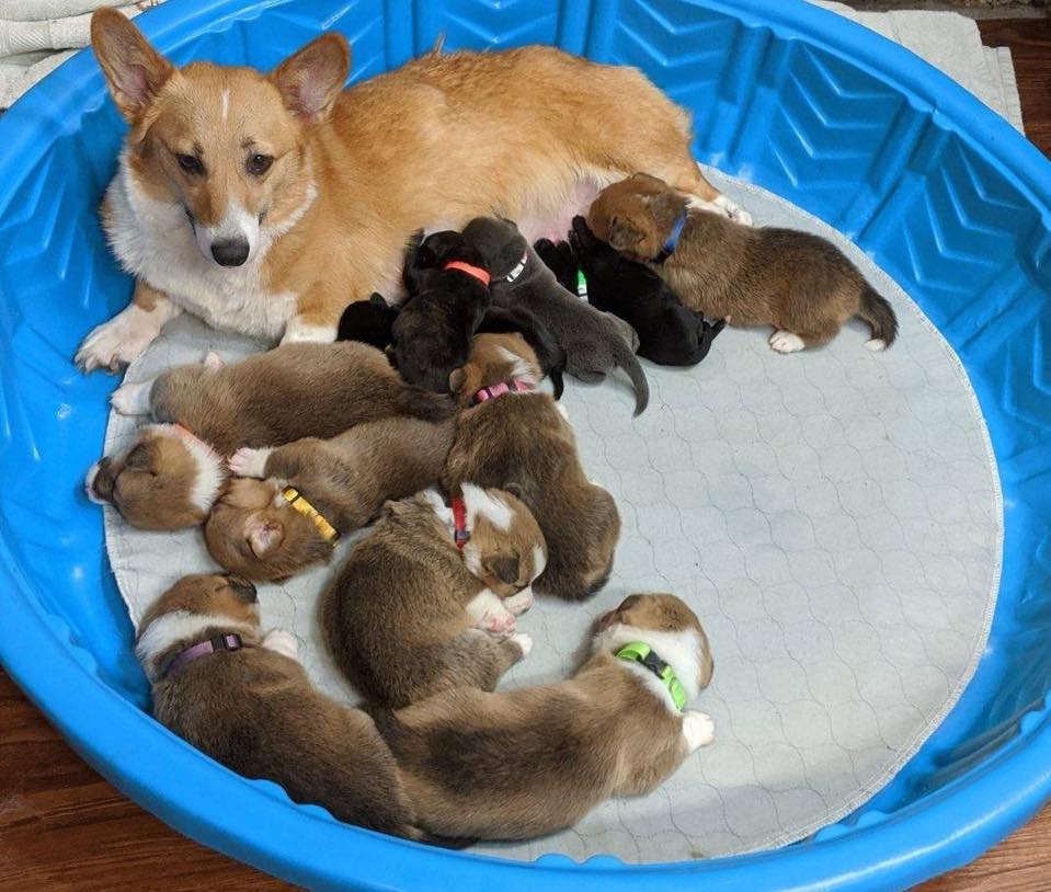 Sara y todos sus cachorros
