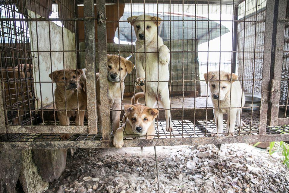 Segunda ciudad prohíbe consumo de perros