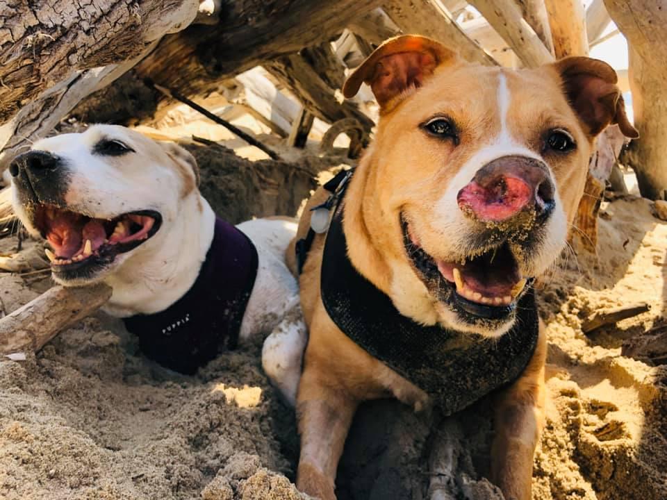 Perro adoptado en la playa con su hermano