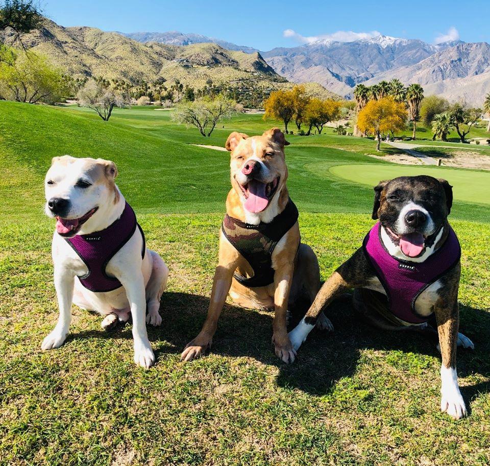 Toretto y sus hermanos